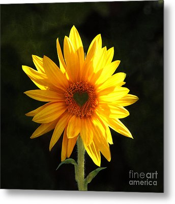 Metal Print featuring the photograph Sunflower Love by Marjorie Imbeau