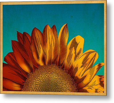 Sunflower Metal Print by Meg Shearer