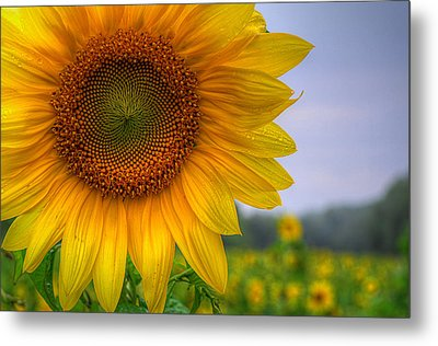 Sunflower Metal Print by Michael Donahue