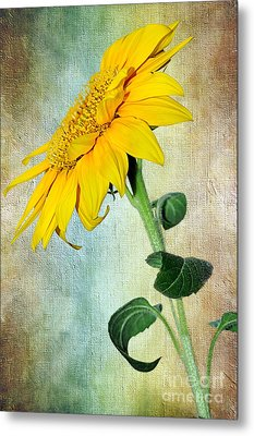 Sunflower On Textured Canvas Metal Print by Kaye Menner