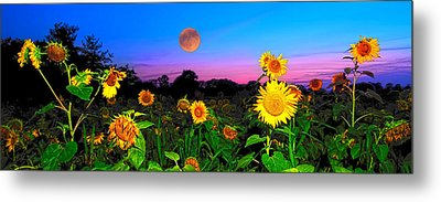 Sunflower Patch And Moon  Metal Print by Randall Branham