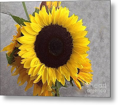 Sunflower Photo With Dry Brush Filter Metal Print