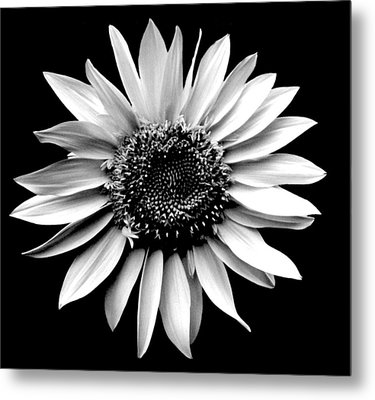'sunflower Portrait' Metal Print