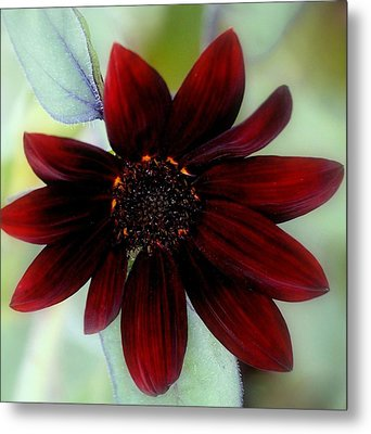 Sunflower Red Metal Print by Rosanne Jordan