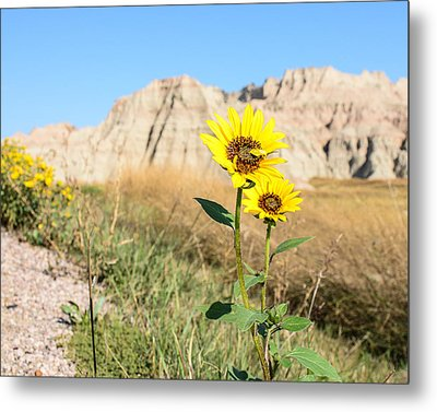 Sunflower Metal Print by Robin Williams