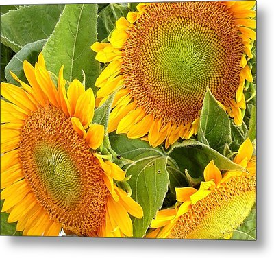 Sunflower Smiles Metal Print by Kim Bemis