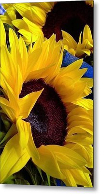 Sunflower Sunny Yellow In New Orleans Louisiana Metal Print
