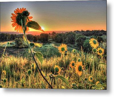 Sunflower Sunrise 1 Metal Print by Diane Alexander