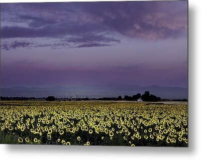 Metal Print featuring the photograph Sunflower Sunrise by Kristal Kraft
