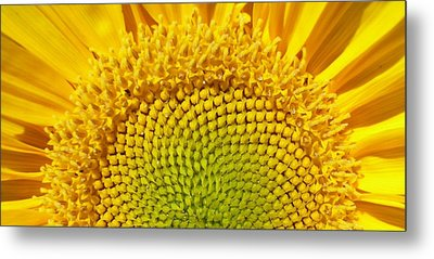 Metal Print featuring the photograph Sunflower Sunrise by Michael Dohnalek