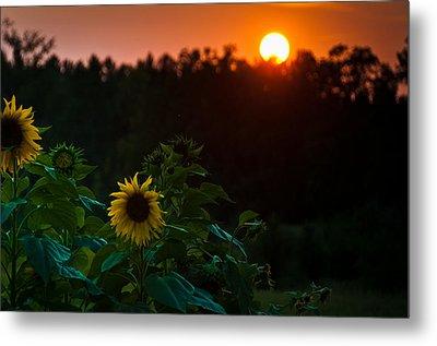 Metal Print featuring the photograph Sunflower Sunset by Cheryl Baxter