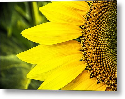 Sunflower Sunshine Metal Print
