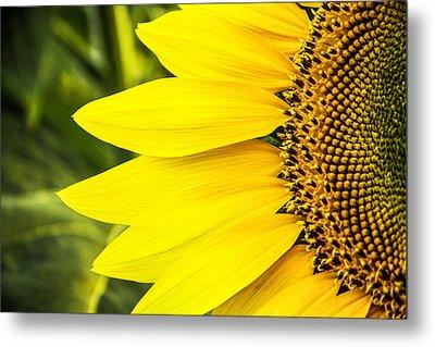 Sunflower Sunshine Metal Print by Steven Bateson