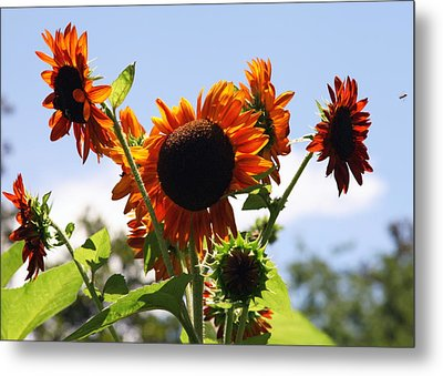 Sunflower Symphony Metal Print by Karen Wiles