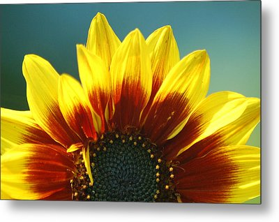 Metal Print featuring the photograph Sunflower by Tam Ryan