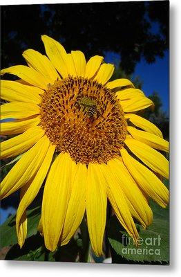 Sunflower Visitor Series 3 Metal Print