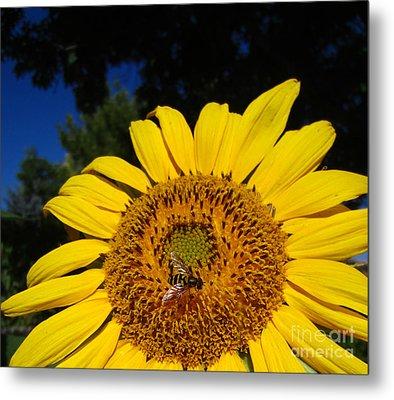Sunflower Visitor Series 4 Metal Print