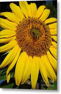 Sunflower Visitor Series 5 Metal Print