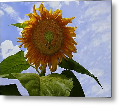 Sunflower With Busy Bees Metal Print by Chris Flees