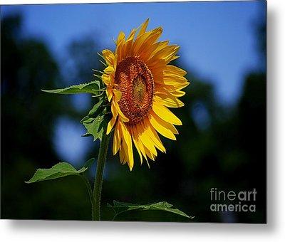 Sunflower With Honeybee Metal Print