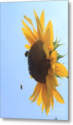 Sunflower With Visitors Metal Print