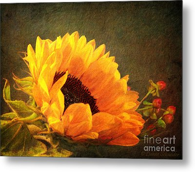 Sunflower - You Are My Sunshine Metal Print by Lianne Schneider
