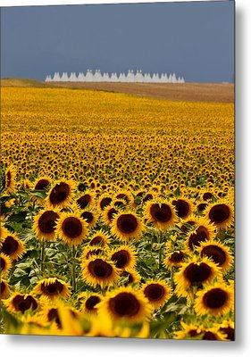 Metal Print featuring the photograph Sunflowers And Airports by Ronda Kimbrow