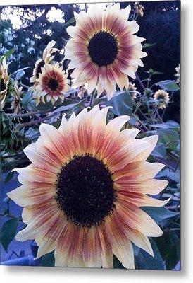 Sunflowers At Dusk Metal Print