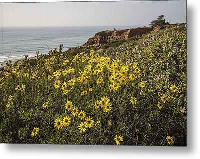 Metal Print featuring the photograph Sunflowers At Yucca Point by Lee Kirchhevel