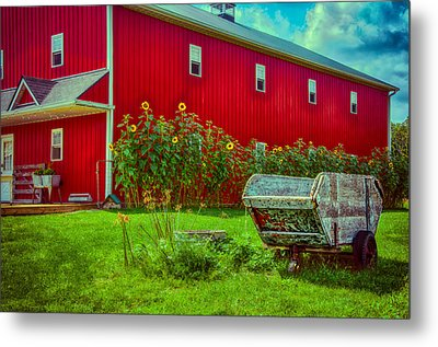 Sunflowers Beside A Big Red Barn Metal Print