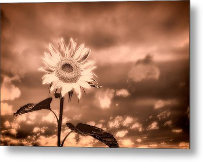 Sunflowers Metal Print by Bob Orsillo