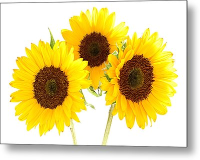 Sunflowers Metal Print by Claudio Bacinello
