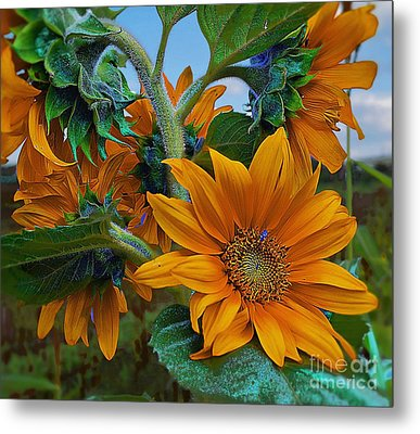 Sunflowers In A Bunch Metal Print