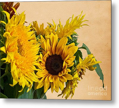 Sunflowers On Old Paper Background Art Prints Metal Print