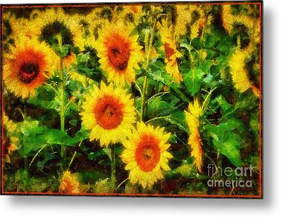 Sunflowers Parade In A Field Metal Print