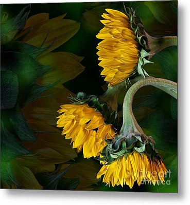 Metal Print featuring the photograph Sunflowers by Shirley Mangini