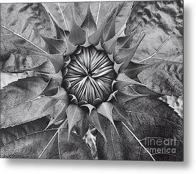 Sunflower's Shades Of Grey Metal Print