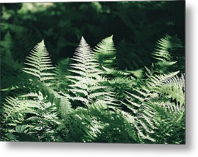 Metal Print featuring the photograph Sunlight And Shadows-algonquin Ferns by David Porteus
