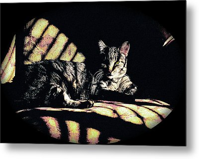 Sunlight And Whiskers Metal Print by Ronald Hurst