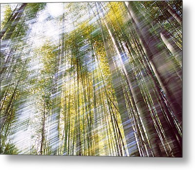 Sunlight In Bamboo Forest Metal Print by Panoramic Images