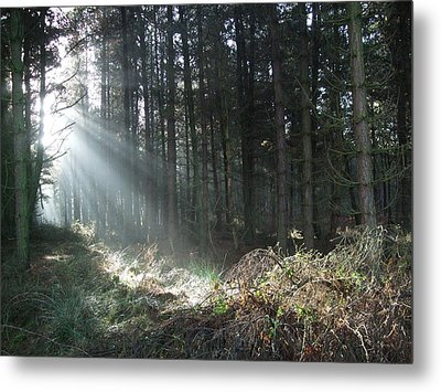 Metal Print featuring the photograph Sunlight On Cannock Chase by Jean Walker