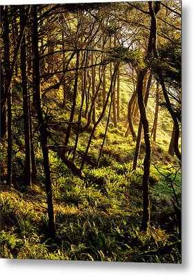 Sunlight On Fern Plants Growing In Metal Print by Panoramic Images
