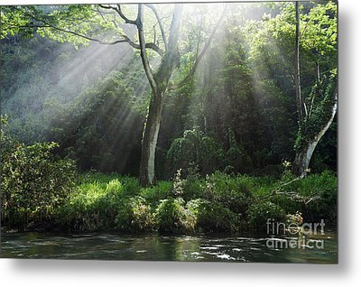 Sunlight Rays Through Trees Metal Print by M Swiet Productions