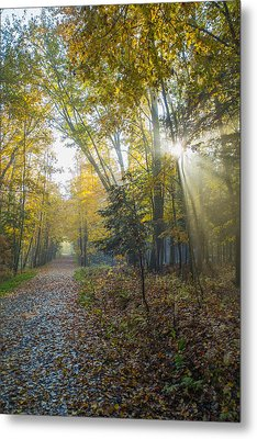 Sunlight Streaming Through The Trees Metal Print by Jacques Laurent