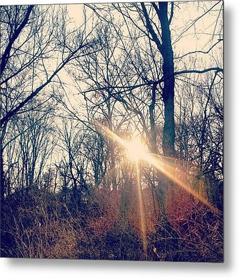 Sunlight Through The Trees Metal Print by Genevieve Esson