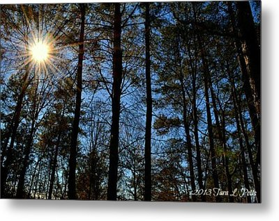 Metal Print featuring the photograph Sunlight Through Trees by Tara Potts