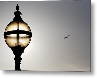 Sunlight Metal Print by Wendy Wilton