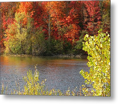 Sunlit Autumn Metal Print by Ann Horn