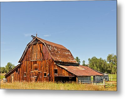 Metal Print featuring the photograph Sunlit Barn by Sue Smith