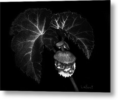 Metal Print featuring the drawing Sunlit Begonia by Sandra LaFaut